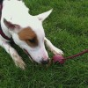 Training Your Dog…A Well-Trained Dog Is A Friend For Life