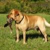 Buying Hunting Dog Training Aids