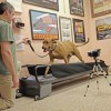 Great Tips For Buying a Dog Treadmill