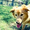 What are some good books about lost dogs?