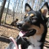 Probiotic Action Comments on Use of Probiotics for Canine Health